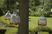 Wasp traps hanging on a tree in a garden
