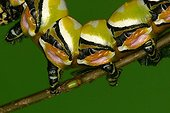 Abdominal part of a caterpillar in a private breeding