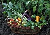 Harvest of vegetables at Domaine de St Jean de Beauregard