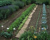 Vegetables rows and cloches in a kitchen garden