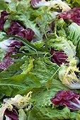 Mixed green salad in a dish