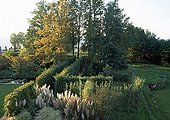 Japanese silver grass and pampas grass in a garden in autumn