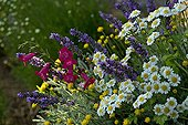Perennials mix in bloom in a garden of Provence