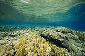 Fire Corals and Hard Corals in the Red Sea Egypt