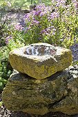 Carved stone trough filled with water in a garden ; It serves as a watering hole for birds