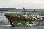 Culture d'Algues Rouges pour l'extraction de la carraghenane ; On utilise l'algue rouge en gélifiant et émulsifiant alimentaire