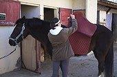 Jeune cavalière mettant un tapis de selle à son Cheval