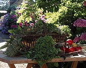 Provence herbs and tomatoes on a table