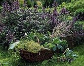 Harvest of vegetable plants and vegetables in a basket