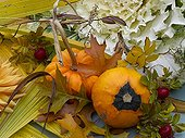 Autumn still-life of coles rosehips and marrows