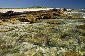 Blacktip Reef Shark Entrecasteauxreefs Huon island ; Major nesting site for green turtles