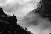 """Chamois at sunrise Hohneck Mass  in Vosges mountains ; Price at """"Photophiles"""" contest"""