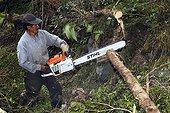 Cutting a tree trunk before cutting into boards Ecuador
