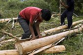 Debarking a tree before cutting into boards Ecuador