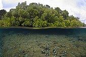 Soft corals and mangrove split image, Raja Ampat, West Papua, Indonesia