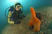 Orange encrusting Sponge and Diver, Piran, Adriatic Sea, Slovenia