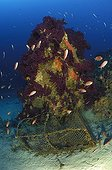 Fish Trap at Coral Reef, Vis Island, Adriatic Sea, Croatia