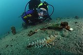 Kuruma Prawn and Diver, Piran, Adriatic Sea, Slovenia