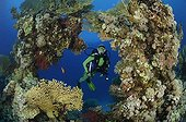 Fire Corals and Diver, Fury Shoals, Marsa Alam, Red Sea, Egypt