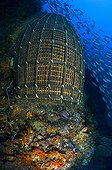Fish Trap at Coral Reef, Ambon, Maluku Islands, Banda Sea, Indonesia