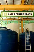 Plant of condoms accomplished based on latex Brazil ; Natural latex is harvested by seringueiros