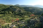 Sentiers botaniques de Fontcaude