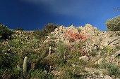 Cactus and succulent on the Sentiers botaniques de Fontcaude