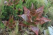 Aloes on the Sentiers botaniques de Fontcaude