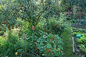 Vegetable garden in The Garden of Marie-Ange in Croisette ; Pear tree 'Durondeau'