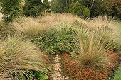 Massif of Grasses in the Garden of Marie-Ange in Croisette ; Japanese knotweed : Fallopia japonica var. compacta