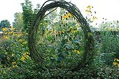 Plant window made by branches and yellow Rubeckies