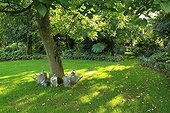 Walnut in a glade of the Garden of Marie-Ange France