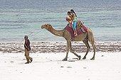 Two girl tourists riding camel Diani Beach Kenya