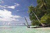Palm-lined Beach at  Rock Islands Palau