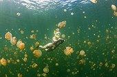 Skin Diving with harmless Jellyfishes Jellyfish Lake Palau