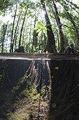 Splitimage of Mangrove Jellyfish lake Palau