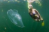 Moon Jellyfish and Skin Diver Palau Micronesia