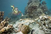 Skin Diver meets Saltwater Crocodile Palau Micronesia