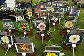 Horticol flowers Flowers show of St Priest France