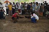 Présentation des Coqs pour le combat Bali Indonésie ; Les combats de coqs, interdits en Indonésie, profitent d'une tolérance sur<br>l'île de Bali. Le combat (tetadjen ou sabungan) a lieu dans une arène carrée<br>de 6 mètres de coté, dans un programme composé de 9 ou 10 matches (sehet). Une<br>dizaine d'hommes pénètrent dans l'arène. Chacun portant un coq et recherchant<br>un adversaire idéal. On attache à chaque coq son éperon (tadji) de 10 à 12 cm.<br>Leur fixation requiert un savoir faire particulier, celui des éperonniers peu<br>nombreux. Les combats sont régis par des règles minutieuses et ancestrales. Une fois un coup décisif porté, les coqs sont séparés.