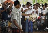 Combat de Coqs Bali Indonésie ; Les combats de coqs, interdits en Indonésie, profitent d'une tolérance sur<br>l'île de Bali. Le combat (tetadjen ou sabungan) a lieu dans une arène carrée<br>de 6 mètres de coté, dans un programme composé de 9 ou 10 matches (sehet). Une<br>dizaine d'hommes pénètrent dans l'arène. Chacun portant un coq et recherchant<br>un adversaire idéal. On attache à chaque coq son éperon (tadji) de 10 à 12 cm.<br>Leur fixation requiert un savoir faire particulier, celui des éperonniers peu<br>nombreux. Les combats sont régis par des règles minutieuses et ancestrales. Une fois un coup décisif porté, les coqs sont séparés.