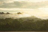 Brume sur la forêt primaire du Parc National de Manu Pérou