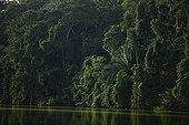 Forêt primaire au bord de la rivière Madre de Dios Pérou