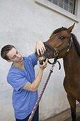 Vétérinaire auscultant un Cheval de selle à Obreck France