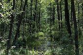 Forêt riveraine Parc National Bierbrza  Pologne