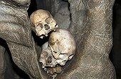 Crânes humains en pays des Toraja Sulawesi