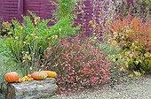 Harvest of squashs in a garden in autumn
