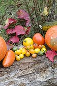 Harvest of squashs and tomatoes in a garden in autumn
