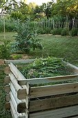 Compost plant in a garden in summer Provence France