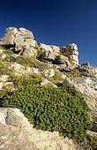 Végétation du Cap de Bonne Espérance Afrique du Sud
